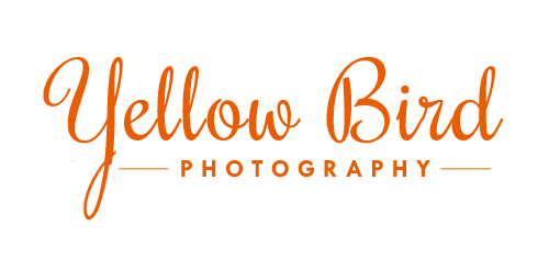 Yellow Bird Photography